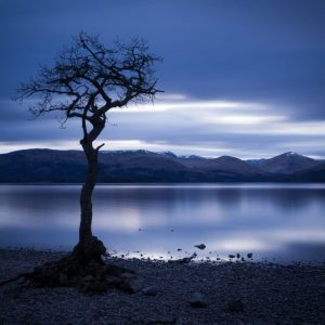 Lone Tree of Loch Lomond